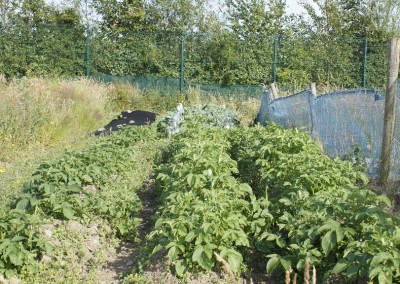 Beech-Hill Allotments Home away from Home