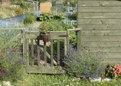 Beech Hill Allotments Sheds & More