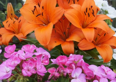 Beech Hill Allotments for perfect bouquets