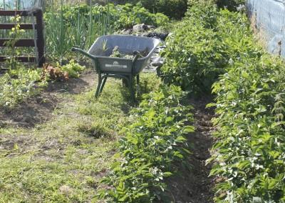 Dublin Allotment Easy Gardening