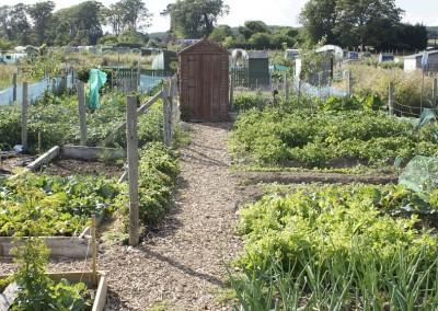 Dublin Allotment Perfect Gardening