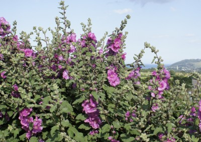 Wicklow Allotments Gardening Bliss