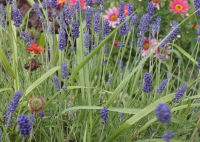 Wicklow Allotments Garned Meadows
