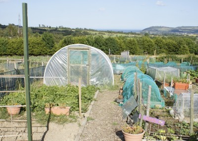 Wicklow Allotments GreenHouse