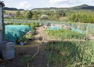 Wicklow Allotments Pefect Peace