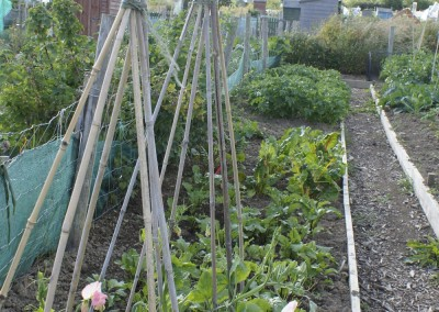 Wicklow Allotments Ready For Growth