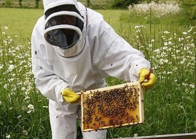 Bee Keeping Course